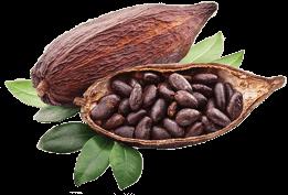 Decorazione al cacao